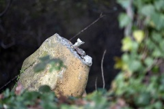 Vandalism to Paleotherium 2015 remains unrepaired in 2020