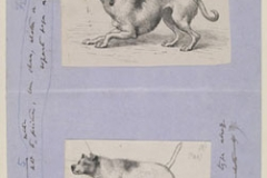 darwin-expression-of-emotions-in-man-and-animals-joe-cain-sharon-messenger-05